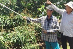Làm giàu ở nông thôn: Biến đất cằn thành trang trại tiền tỷ