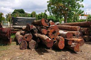 Đội trưởng kiểm lâm nhận hàng trăm triệu của trùm gỗ lậu Phượng 'râu'