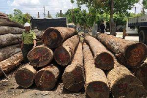 Bắt nguyên đội trưởng kiểm lâm tiếp tay vận chuyển gỗ lậu của trùm gỗ Phượng 'râu'