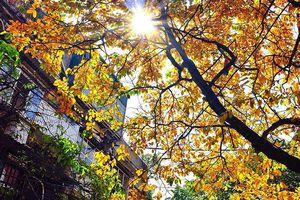 Thời tiết 24/9: Bắc Bộ nắng vào ban ngày