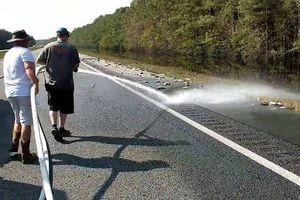 Lính cứu hỏa dùng vòi phun nước dọn dẹp hàng nghìn con cá trên đường