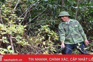 Kiên trì chinh phục rừng hoang, người thương binh xưa nay thành tỷ phú