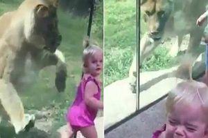 Thót tim clip sư tử lao đến vồ em bé trong vườn thú