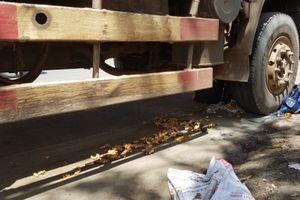 Xe tải tông người đàn ông chở nghệ tử vong tại chỗ