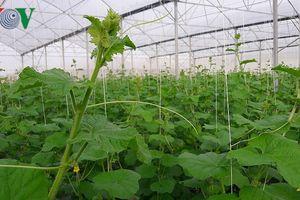 Sản xuất nông sản sạch 'chậm lớn' do đâu?