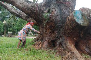 Đắk Lắk: Phục dựng lễ cúng chặt hạ cây của người Ê Đê