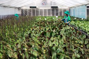 Ngành nông nghiệp Hà Nội: Bước chuyển mạnh sau dồn điền đổi thửa