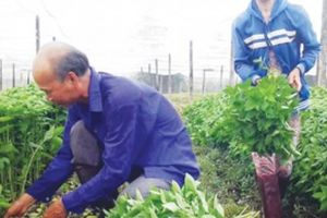 Ứng dụng công nghệ cao, nông dân thêm thu nhập