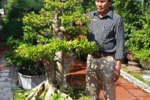 Đà Nẵng: Cựu thợ điện kiếm tiền tỷ từ vườn cây cảnh