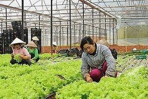 Hà Nội yêu cầu tháo gỡ khó khăn vướng mắc cho nông dân