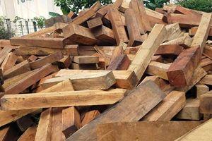 Vụ gỗ lậu ở huyện Mang Yang: Tỉnh ủy chỉ đạo điều tra khởi tố vụ án