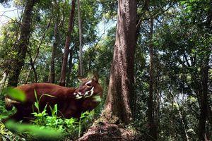 Hỗ trợ bảo tồn khu vực Trung Trường Sơn thuộc tỉnh Quảng Nam