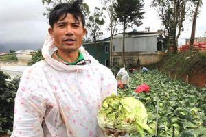 Phía sau nỗi đau của nông dân khi nông sản Trung Quốc nhái nông sản Đà Lạt