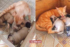 Quá đau lòng vì mất con, mèo mẹ lén sang chăm sóc 3 chú chó con để nguôi ngoai nỗi buồn
