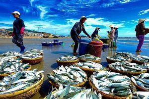 Ngành hải sản chung tay gỡ thẻ vàng IUU
