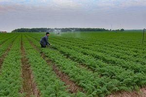 Bắc Ninh: Hỗ trợ nông dân xây dựng các mô hình phát triển kinh tế