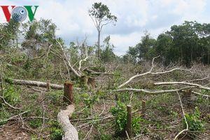 Xử lý nghiêm nếu phát hiện tình trạng bảo kê phá rừng Tà Cú