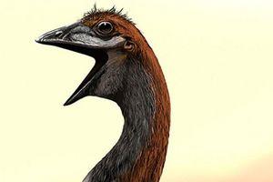Giải mã bí ẩn về loài chim lớn nhất thế giới nặng 860 kg