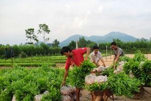Tái cơ cấu nông nghiệp để phát triển bền vững