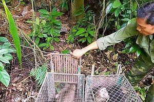 Thả 11 động vật quý hiếm về rừng sau khi hoàn tất cứu hộ