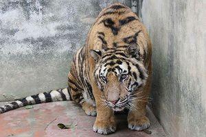 Xử lý tội phạm về động vật hoang dã: Cơ quan tố tụng cần thực hiện chính sách '3 không'