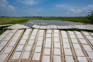Sức sống làng nghề bánh tráng ở Hưng Phúc