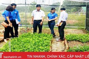 Tuổi trẻ Hương Sơn đi đầu xây dựng vườn ươm cây giống