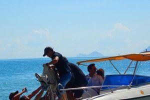 Người dân, du khách háo hức xem giải cứu cá heo trôi dạt vào bờ biển Nha Trang