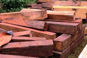 Tỉnh Gia Lai chỉ đạo quyết liệt công tác quản lý bảo vệ rừng