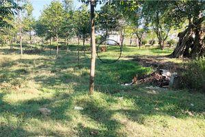 Thừa Thiên Huế: Trường học 'biến' thành nơi chăn gia súc, gia cầm