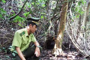 11 cá thể động vật được thả về Vườn quốc gia Phong Nha - Kẻ Bàng