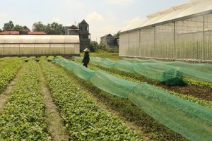 Huyện Vĩnh Lộc xây dựng các mô hình điểm an toàn thực phẩm