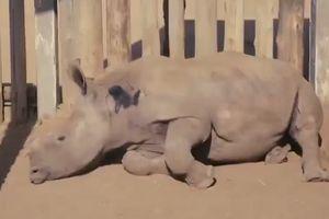 Giới trẻ tham gia Chiến dịch chấm dứt buôn bán sừng tê giác