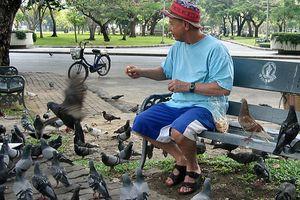 Thái Lan: Cho chim bồ câu ăn cũng có thể bị bỏ tù
