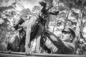 Vì sao Hồng quân dùng chó cảm tử tấn công xe tăng Đức?