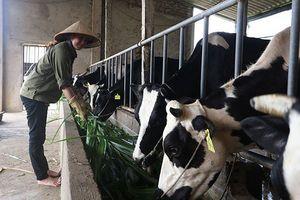 Hà Nội nên tạm dừng đấu thầu cung cấp sữa học đường, thanh tra toàn bộ đề án