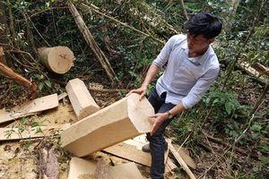 Hiện trường khu rừng bị phá ở huyện Mang Yang