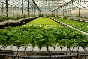 Sắp có thêm 2 khu nông nghiệp công nghệ cao