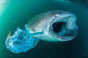 Chàng trai thích lặn muốn dọn sạch 'đảo rác' Thái Bình Dương