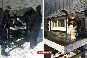 Con mèo vô gia cư đến Sở cảnh sát và không rời đi, họ đã xây cho nó một căn nhà đẹp