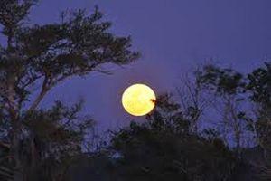 Trăng trăng, đèn đèn