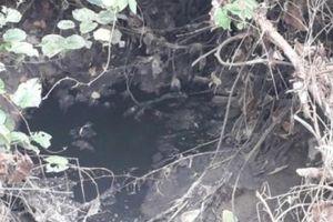 Thái Nguyên: Trại lợn không phép 'hành' dân bằng mùi hôi nồng nặc