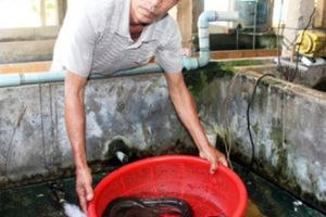 Người nuôi chình đầu tiên trên đất Bình Định, lãi 400 triệu/năm