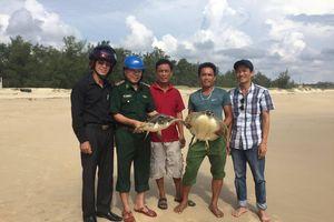 Cứu 2 con rùa biển mắc lưới ngư dân, thả về tự nhiên