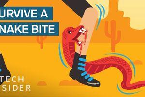 Kỹ năng sống sót bạn nhất định phải biết khi bị rắn cắn