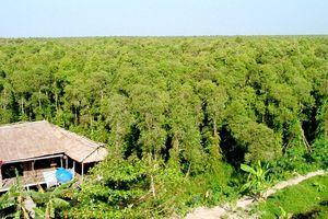 Kiên Giang: Rà soát, quy hoạch phát triển rừng theo hướng bền vững