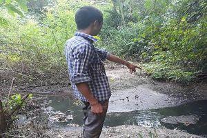Thái Nguyên: Dân 'sống không nổi' với trang trại lợn ngang nhiên xả thải ra môi trường