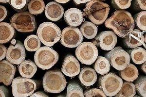 Xuất khẩu gỗ và sản phẩm gỗ Việt Nam đứng đầu khu vực Đông Nam Á
