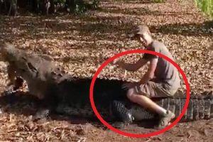 Clip: Du khách dùng xác kangaroo dụ cá sấu khổng lồ lên bờ để cưỡi