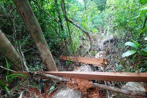 Đình chỉ đội trưởng, điều chuyển nhân viên vì để xảy ra phá rừng ở Huế